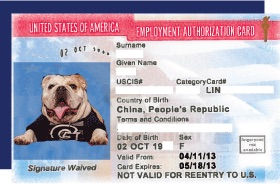 jack the bulldog on employment authorization card